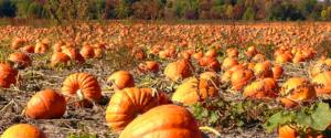 Kuaotunu Pumpkin festival