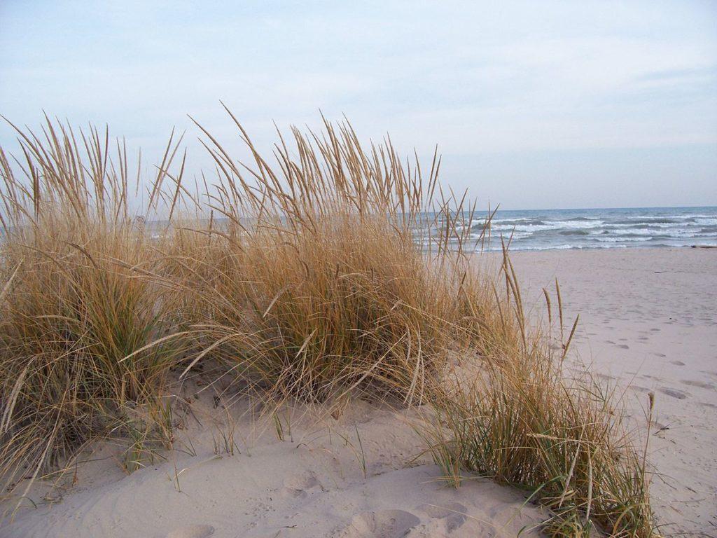 Sand Dune Planting