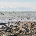 Thames Coast Radio | Coromandel's CFM 94.0
